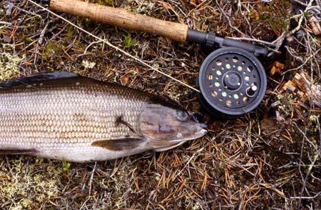 Vi fiskede ikke lørdag men pakkede og rejste